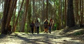 фронт : Group of friends camping in the forest. Friends walking together in the forest 4k Стоковые видеозаписи