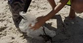 carità : Low section of female volunteer cleaning beach on a sunny day. She is picking up trash 4k