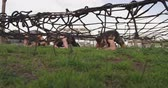 engel : Front view of a young Caucasian man and two young Caucasian women crawling under a net at an outdoor gym during a bootcamp training session