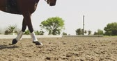 lovaglás : Low section side view of a chestnut horse running in a paddock during a dressage competition on a sunny day, in slow motion