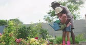 róża : Side view of an African American man and his mixed race daughter enjoying time at a garden together, kneeling, planting, a man is holding a girl who is watering the plants with a watering can, in slow motion Wideo