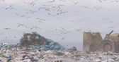 escavadeira : Flock of birds flying over vehicle working and clearing rubbish piled on a landfill full of trash with cloudy overcast sky in the background in slow motion