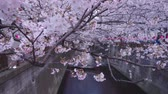 kwiecień : Cherry Blossoms At Meguro River, Tokyo, Japan