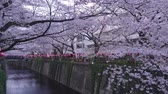 abril : Cherry Blossoms At Meguro River, Tokyo, Japan
