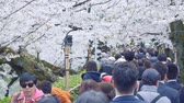 cseresznye : Tokyo, Japan - April 2019: people Crowd Tourists Cherry Blossom Ueno Park Tok Stock mozgókép