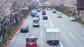 生活方式 : Aerial View Traffic Car Avenue Tokyo Downtown Cherry Tree Sakura Flower Car Park 影像素材