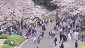 multidão : Tokyo, Japan - April 2019: people Crowd Tourists Cherry Blossom Ueno Park Tok Stock Footage
