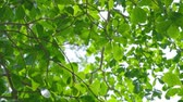 Beautiful Sunshine Through Leaves Of Summer Tree