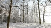 harikalar diyarı : video footage of a forest in Winter with snow in germany, Europe
