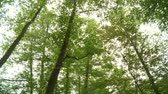 verdejante : video footage of a forest in germany