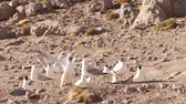 andy : video footage of Birds in the highlands of Bolivia Dostupné videozáznamy