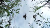 video footage of a swarm of birds, filmed from a camera lying on the ground low-angle shot