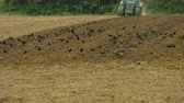 4K video footage: Tractor plowing a acre in germany Stok Video