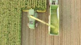 Aerial video of harvesting a corn field in germany with a combine harvester Stok Video