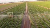 simetria : UHD 4K video Aerial Irrigation plant watering a field salad. Summer 2015 in Germany, Europe