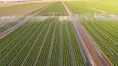 Aerial video footage from germany: Watering a lettuce field in summer