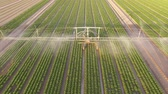 Aerial video footage of a sprinkler system on a salad field in summer in germany.