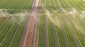 Aerial video footage of a irrigation plant watering a field salad. Summer 2015 in Germany. UHD 4K resolution from a copter Stok Video