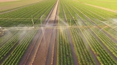 UHD 4K video Aerial Irrigation plant watering a field salad. Summer 2015 Germany