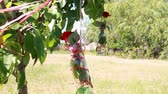 шпагат : decorations of roses in a bottle on the tree
