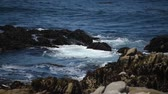ireland : beautiful view of the rocky shore of the ocean, lots of gulls.