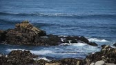cevada : beautiful view of the rocky shore of the ocean, lots of gulls.