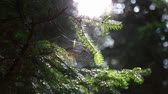 In the forest on the tree spider web with a spider on the background of the sun