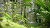 enérgico : Tropical waterfall in tropical rainforest. Falling and running water on rock, drops falling into water and stones. Exotic tropical jungle plants. Moss-enriched stones. Distinct water level. Stock Footage