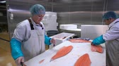 gutting : Working Team In A Seafood Processing Factory. Caucasian woman and Asian man slicing a fillet of salmon at table. Dolly shot.