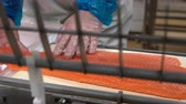 gutting : A worker puts salmon fillet on automatic feed for slicing fish in A Seafood Processing Factory. Close up. Stock Footage