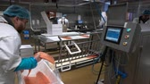gutting : HANKO, FINLAND - NOVEMBER 14, 2016: Working Team In A Seafood Processing Factory. A worker puts salmon fillet on automatic feed for slicing fish. Stock Footage