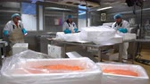 gutting : HANKO, FINLAND - NOVEMBER 14, 2016: Working Team In A Seafood Processing Factory. The men are packing the salmon fillet for transport.