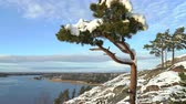 skalní útes : Scandinavian landscape. Lonely pine covered snow on a rock over the Baltic Sea. Finland in the early winter