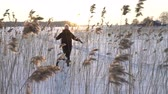 canne : Winter fun snow vacation. Young woman with dog walking among the reeds on the beach of the frozen sea, lake in sunny day in Scandinavia. Slow motion