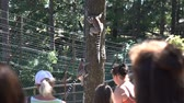 madagaskar : KRISTIANSAND, NORWAY - JULY 07, 2018: Visitors to the zoo admiring the ring-tailed lemurs. The Dyreparken is a leisure park with animals, summer theatre and other attractions, has over 800 animals