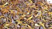 cantharellus : Craterellus tubaeformis (Cantharellus tubaeformis), edible fungus, also known as Yellowfoot, winter mushroom, or Funnel Chanterelle. Mushrooms on the counter of the Helsinki street market Stock Footage