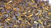 kültürlü : Craterellus tubaeformis (Cantharellus tubaeformis), edible fungus, also known as Yellowfoot, winter mushroom, or Funnel Chanterelle. Mushrooms on the counter of the Helsinki street market Stok Video