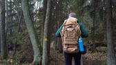 dürbün : A middle-aged man with a backpack walking along an ecological natural educational trail through the northern autumn forest in a nature park in Finland. Slow motion