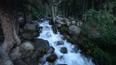 Mountain River in Colorado Wilderness. Stock Footage
