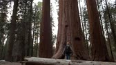 kings canyon : Walking and Exploring Hiker on the Giant Ancient Forest Trailhead in Sequoia National Park in California, United States of America. Stock Footage