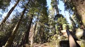 kings canyon : Sequoia National Park in the California, United States. Camera Motion.