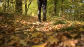 kocogás : Fall Season Forest Run. Runner on the Scenic Autumn Forestry Path
