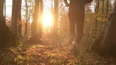 kocogás : Fall Foliage Scenery and Sunset. Caucasian Runner in a Forest. Slow Motion Footage