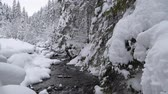 algida : Scanic Winter Landscape with Small Mountain River and the Forest. Filmati Stock