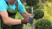 profissional : Caucasian Garden Worker in His 30s Trimming Plants Using Small Garden Scissors.