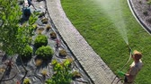 instalação : Aerial Footage of Professional Gardener with Garden Hose Watering Newly Installed Natural Grass Turfs in a Garden.