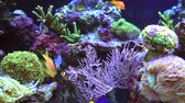 living environment : Colorful Marine Plants and Animals in the Marine Aquarium.