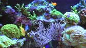 living environment : Colorful Coral Reef Aquarium with Tropical Fishes and Many Spices of Soft and Living Stone Corals.