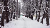 Snow-covered city alley with trees strewn with snow. Vidéos Libres De Droits