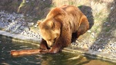 animais selvagens : Bear in Bern Zoo Park